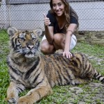 tigerkingdom -5