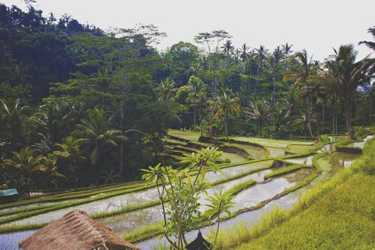 Bali - 48