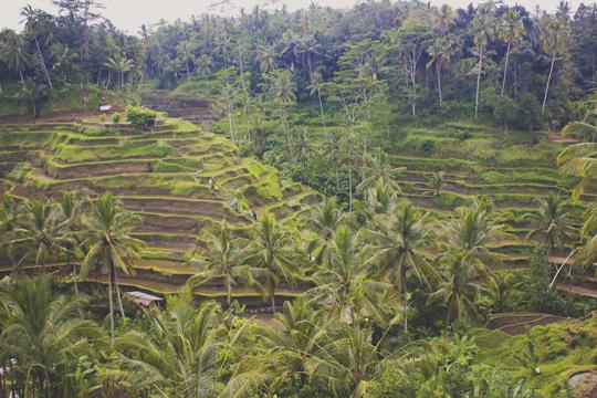 Bali - 68